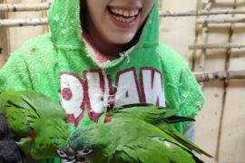 Na zdjęciu znajduje się uśmiechnięta dziewczynka trzymająca kubek karmy dla papug. Na rękach siedzą jej 2 papugi i dziobią pokarm. Dziewczynka ubrana jest w specjalny ręcznik, chroniący ubranie przed wybrudzeniem.